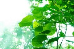 Trädfilialer och sidor är gröna Arkivbild
