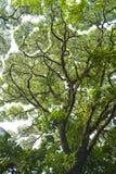 Trädfilialer och sidor skapar modeller mot himlen arkivfoto