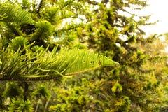Trädfilialer och skog på Sunny Day royaltyfri foto