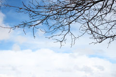 Trädfilialer ovanför blå himmel med moln Arkivfoto