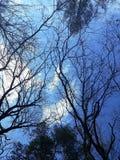 Trädfilialer på himmelbakgrund arkivfoto