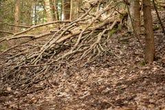 Trädfilialer på skoggolvet royaltyfri bild
