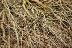 Trädfilialer på skoggolvet royaltyfria bilder