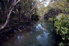 Trädfilialer reflekterade i flodens yttersida Arkivbilder
