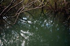 Trädfilialer reflekterade i flodens yttersida Royaltyfria Foton