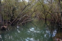 Trädfilialer reflekterade i flodens yttersida Royaltyfria Bilder