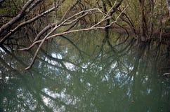 Trädfilialer reflekterade i flodens yttersida Fotografering för Bildbyråer