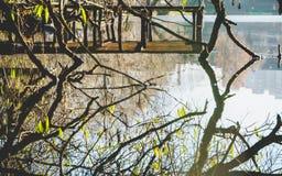 Trädfilialer reflekterade i vatten royaltyfria bilder