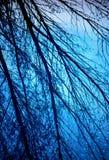 Trädfilialer reflekterar från simbassäng Arkivfoton