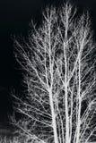 Trädfilialer som isoleras på svart bakgrund Royaltyfria Bilder