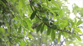 Trädfilialer som svänger i brisen Arkivfoton
