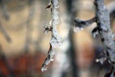 Trädfilialer som täckas med is. Arkivfoto