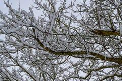 Trädfilialer som täckas med insnöad fransk bygd under jul, kryddar/vintern arkivbilder