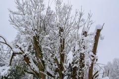 Trädfilialer som täckas med insnöad fransk bygd under jul, kryddar/vintern royaltyfri fotografi