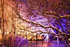 Trädfilialer som täckas med ljusa julljus Vinterstaden parkerar vita röda stjärnor för abstrakt för bakgrundsjul mörk för garneri Arkivfoton
