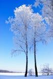 Trädfilialer som täckas med rimfrost i vinter. Arkivbild