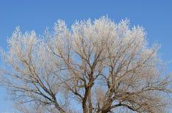 Trädfilialer som täckas med rimfrost mot en blå himmel royaltyfri bild