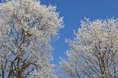 Trädfilialer som täckas med rimfrost mot en blå himmel 2 royaltyfri fotografi
