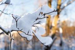 Trädfilialer som täckas med snö mot himlen royaltyfria bilder