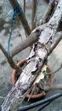 Trädfilialer torkar ut Royaltyfri Foto