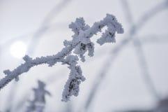 Trädfilialerna som täckas med rimfrost arkivfoto
