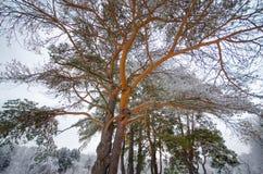 Trädfiliallinjer Arkivfoton