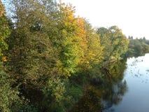 Trädfloden parkerar skogvatten royaltyfri bild