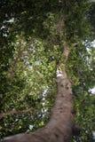 Trädfotografi med ledande linjer arkivbild