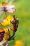 Trädfrukt Arkivfoton