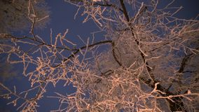 Trädfruncher som täckas av vit frost stock video