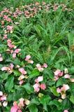 trädgård 009 Royaltyfria Foton
