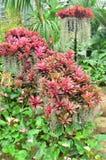 trädgård 011 Royaltyfria Foton