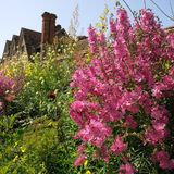 Trädgård Royaltyfria Bilder