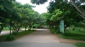 Trädgård Arkivfoton