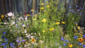Trädgård Royaltyfria Foton