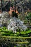 Trädgård av Alcazarslotten, Seville, Andalusia, Spanien Arkivfoton