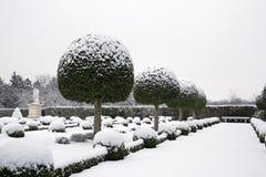 Trädgård av askträdet och idegransträn under snön Arkivfoto