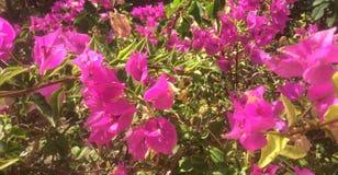 Trädgård av blommor Royaltyfria Foton