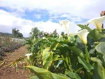 Trädgård av blommor Royaltyfri Bild