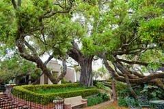 Trädgård av det Cummer museet i Jacksonville, Florida Arkivbilder