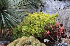 Trädgård av exotiska växter Royaltyfria Bilder