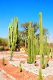 Trädgård av kakturs och suckulenter, Tula de Allende, Mexico royaltyfria bilder