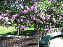 Trädgård av lila buskar med murverket och en grön bänk arkivfoton