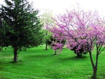 Trädgård av träd med rosa färger Arkivbilder