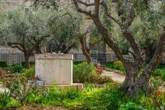 Trädgård av väl Gethsemane - arkivbild