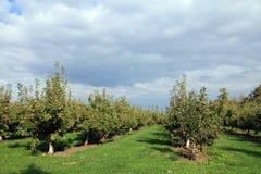 Trädgård för Apple träd Arkivfoton
