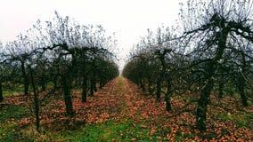 Trädgård för Apple träd i vinter royaltyfri fotografi