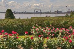 Trädgård för blomma för Duluth ` s i sommar Arkivfoto