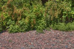 Trädgård för blomma för Duluth ` s i sommar Royaltyfria Foton