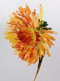 Trädgård för dahlia för blomma för vattenfärgkonstbakgrund färgrik Arkivfoto